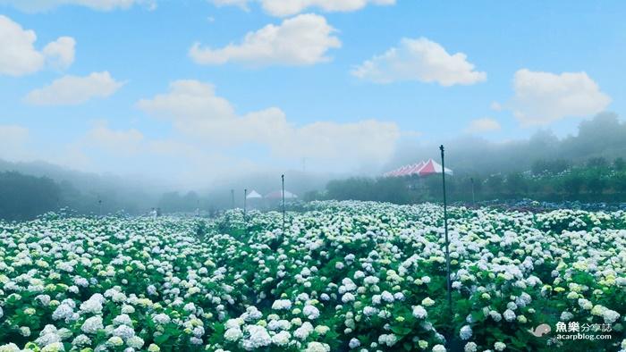 【新北萬里】高家繡球花田第三園區|交通路線|停車資訊|門票收費 @魚樂分享誌