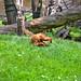 zoo_leipzig_0034