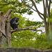 zoo_leipzig_0044