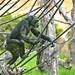 zoo_leipzig_0046