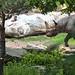 zoo_leipzig_0069