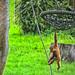 zoo_leipzig_0025