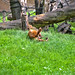 zoo_leipzig_0035