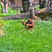 zoo_leipzig_0038