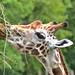 zoo_leipzig_0057