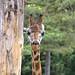 zoo_leipzig_0058