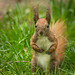 Excuse me mister, do you have any nuts for me?