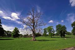 Photo of Hopetoun : Trees & Sky  (John Muir Way/NCR 76)