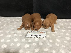 Baby Boys pic 4 5-22