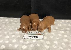 Baby Boys pic 2 5-22