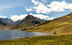 Peace in the Andes