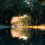 Reflect of green tunnel formed from trees in Phangan island, Thailand