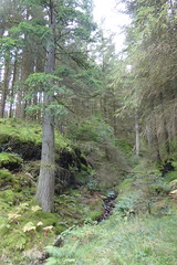 Photo of Whinlatter Forest