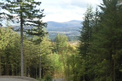 Photo of Keswick through the trees at Whinlatter Forest