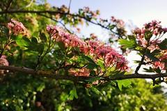 Photo of Tree blossom