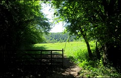 Photo of THE PATH TO DOYLEY WOOD