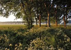 Aardzee Lelystad