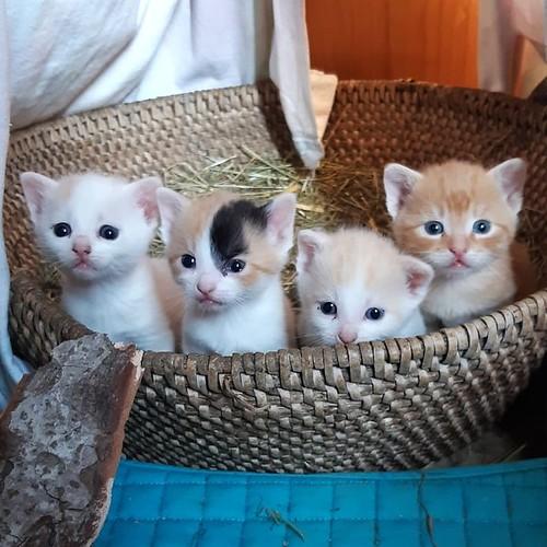 Weinis Katzenbabies klettern bald aus dem Korb