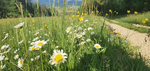 Blumenwiesen im Naturpark Almenland