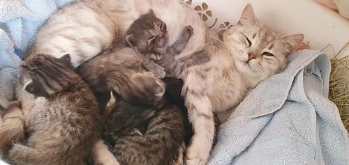 Kiddy's Babies :-)