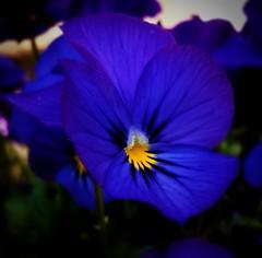 Photo of Flower in Lockdown