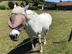 Photo of Our local horse friends - May 2020