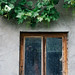 Old window with green spring leaves.