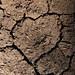 113182el2#heart of soil