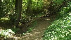 Photo of Nutfield Biodiversity Park