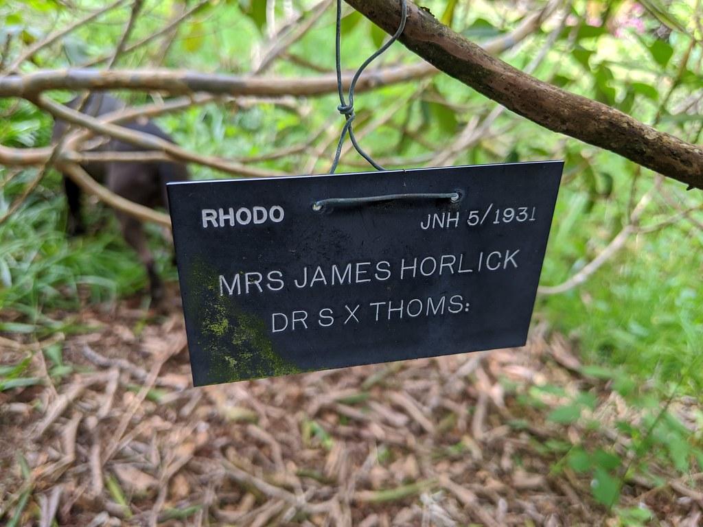 0813 Rh Mrs James Horlick (Dr S x Thoms) label (JNH 5-1931)