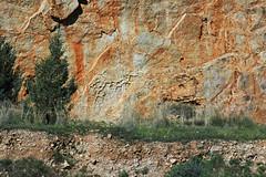 Mudcracks (ABC Range Quartzite, Neoproterozoic; Pichi Richi Pass railroad cut, South Flinders Ranges, South Australia) 4