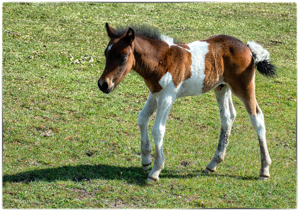 Foals images