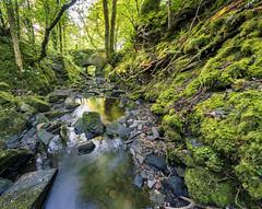 Photo of Mossy stream bank, Lochwinnoch, Renfrewshire, Scotland, UK