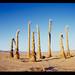 dead palms pinhole. mojave desert, ca. 2014.