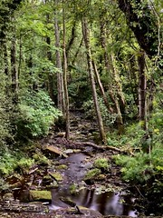 Photo of Osmotherley Stream