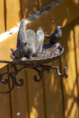 Photo of making a splash