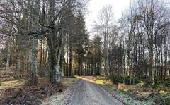 Photo of castle fraser woods