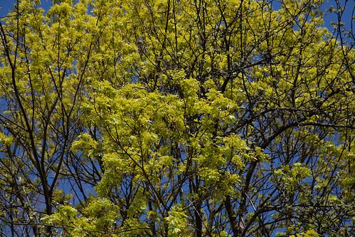 Spring in Helsinki, Finland ©  Ninara