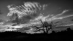 Ese cielo arañado después del confinamiento
