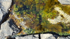 Photo of Mini ecosystem (rockpool)
