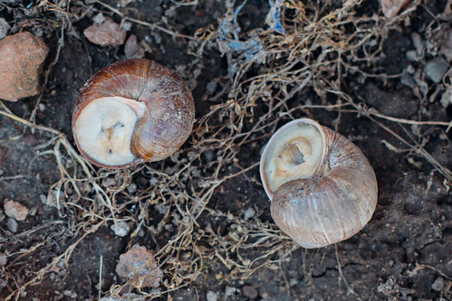 Tow snails close to each other after mating