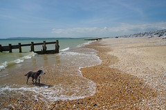 Photo of Max cooling himself down on a near deserted beach......