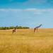 Social Distancing, Maasai Mara