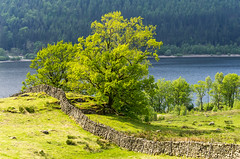 Photo of Thirlmere, Lake District