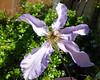 Garden 30-05-20 (46)