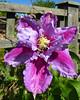 Garden 30-05-20 (24)
