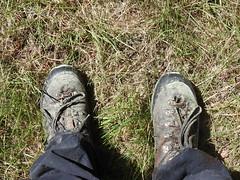 Photo of Scots Pine pollen on shoes - Pinus sylvestris