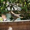 wildlife////uk////birds