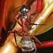 Ferruginous Carpenter Ant - Camponotus chromaiodes, Julie Metz Wetlands, Woodbridge, Virginia