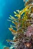 Scuba Dive At Blairgowrie Pier-2